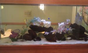 HMC fish tank